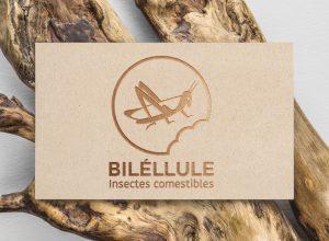 Gaetan Richard graphiste webdesigner 2018 projet insectes comestibles billélule